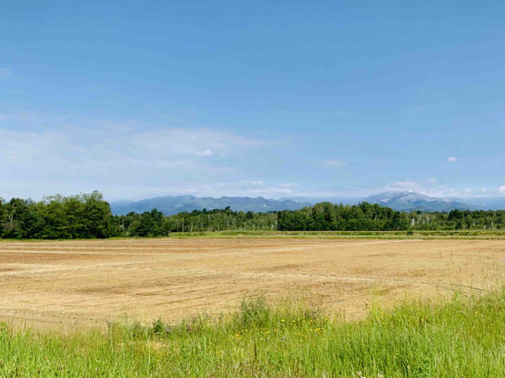 Rijstvelden Piemonte